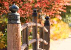 Autumn Bridge (mclcbooks) Tags: fall autumn leaves leaf tree bridge railings fence denverbotanicgardens colorado japanesegarden
