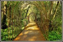 Une allée du parc de Majolan (Les photos de LN) Tags: allée parc majolan blanquefort gironde aquitaine bois végétation arbres verdure nature lumière couleurs teintes nuances automne arceaux