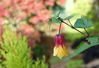 Smile on Saturday: tiny treasures in flora - explored