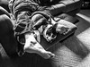 FIMG_2396 (WonderWow Photos) Tags: snooze winston 201709 2017 september uncropped f22