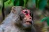 Wild monkey (Mohsan Raza Ali Baloch) Tags: wild wildlife nature naturelover wildlifelover islamabad pakistan monkey animal