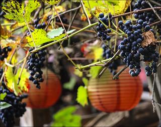 Raisins et lampions (120/365)