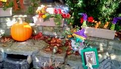 Autumn in library garden! (Maenette1) Tags: autumn garden spiespubliclibrary pumpkin flowers waterfall stones menominee uppermichigan flicker365 michiganfavorites