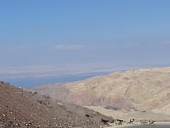 Goats near the Dead Sea