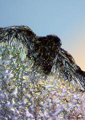 Taking Flight (nomm de photo) Tags: abstract microscopic art micrographicart abstractart reinnomm
