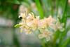 282 DSC_3594 (bbvn_1) Tags: nikon d610 macro orchid flower friday bokeh dof 50mm 14