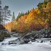 Autumn Morning on the Findhorn River - Scotland