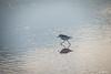 07112017_2036.jpg (aloha033) Tags: oiseau ocean animal lasalie nature
