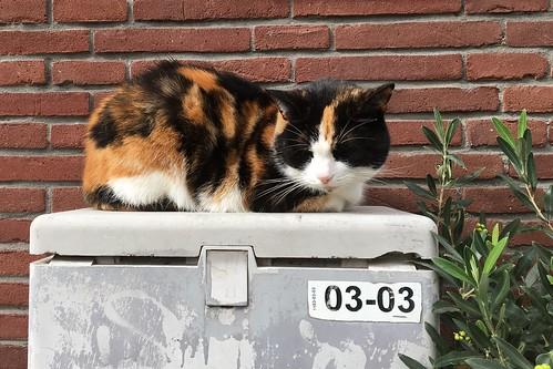 Tortoiseshell Street Cat