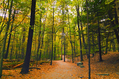 Autumn Trail (Le D.2) Tags: hiking trails george childs delaware watergap recreation area pennsylvania sony alpha7rii autumn fall