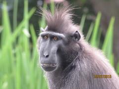 Monkey (staceygallagher2) Tags: ireland eyes photography closeup animal monkey zoo