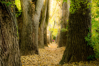 I love the autumn magic