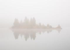 Guarded (John Westrock) Tags: canonef2470mmf28l canoneos5dmarkiii pacificnorthwest fog foggy goldcreekpond minimalism nature trees washingtonstate snoqualmiepass washington unitedstates us longexposure