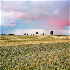 Harvest Time - Agfa Ultra 50 exp* (magnus.joensson) Tags: harvest rolleiflex august skåne sweden sunset format medium 6x6 c41 200204 exp 50 ultra agfa f35 75mm tessar zeiss carl söderslätt