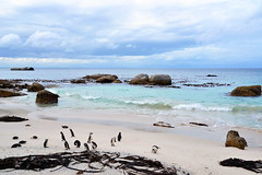 Boulders Beach (Элвин Ваутерсе) Tags: bouldersbeach boulders beach strand sea blue nikon d3100 skylinestudio elwinw africa southafrica cape capetown simonstown penquins birds rocks water ocean clouds view horizon ケープタウン 南アフリカ 南非 开普敦 кейптаун африка оар addo za bay sky coast sand rock animal южнаяафрика