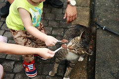 Force-Feeding... (superzookeeper) Tags: formosa 5dmk4 5dmkiv canoneos5dmarkiv ef2470mmf28liiusm eos digital taiwan tw cat catsofflickr catsoftaiwan catsofhoutong catvillage kids houtong feeding people street free freedom forcefeeding