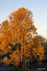 Colours of Fall 2017 (dncswclds) Tags: canonxsi ef40f28