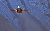 Axalp17_Sani# 0678 (Luigi Sani) Tags: aviazione aerei airplanes aviation aeronautica airshow aerobatic airplane svizzera axalp meiringen brienz berna f18 hornet fa18hornet f5 tiger mountain