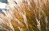 Riverbank Grasses (Orbmiser) Tags: nikkor 28105mm f3545 afd d90 fall nikon oregon portland willametteriver nikkor28105mmf3545afd riverbank grass