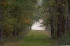 Autumn (jymandu) Tags: automne boisrivièrenaturearbresforêt