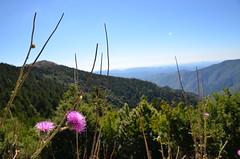 Cévennes view (dfromonteil) Tags: lanscape paysage cévennes mountains montagnes bokeh nature flower fleur pink green blue bleu vert rose colors couleurs