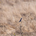Wildcat Canyon Webl hofis-4655