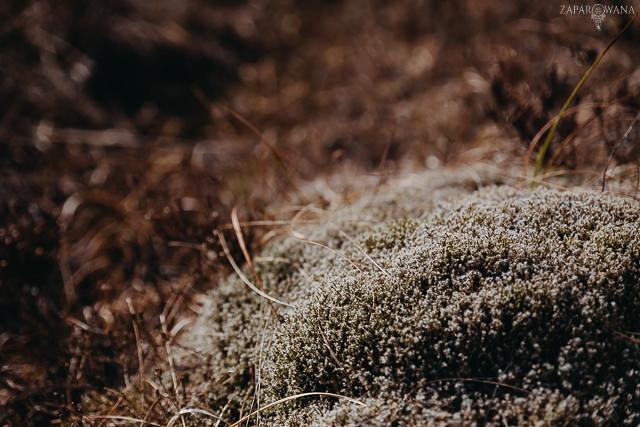 053 - Szkocja - Loch Lomond i okolice - ZAPAROWANA_