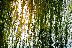 DSCF0911 (ngocnta.1311) Tags: landscape vietnamlandscape sunset lakeview lake