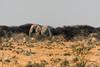Elephant & Antilope (Guy Goetzinger) Tags: elefant tiere nikon goetzinger safari etosha namibia bush animal elephant nature mammal africa afrique wildlife tier säugetier big5 bigfive travel national park namibie voyage natinal 2018 живо́тное 动物 動物 dòngwù bete