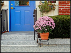 The Blue Door & Pink Flowers At Church Jewelers In Chelmsford, MA. - Photo by STEVEN CHATEAUNEUF Taken On October 20, 2017 (snc145) Tags: porch door steps railing brick plants flowers pot bush cement outdoor photo autumn fall seasons october202017 stevenchateauneuf colors colorful red yellow blue pink green gray black orange vividstriking autofocus flickrunitedaward simplysuperb
