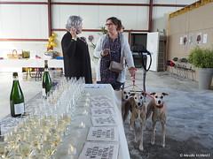 20171020 ChampagneDay Sacy-Damien-Buffet-36 (champagnedbsacy) Tags: champagneday champagne day champagnedamienbuffet dégustationdechampagne tasting glassofchampagne raisingaglass sparklingwine charlespalmervineyards soligalgos whippets greyhounds galgos lévriers capsulesdechampagne montagnedereims event événementiel oenotourisme winetourism crepesparty crêpespartie coopérative vignoble vignes