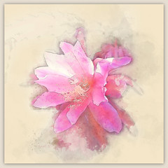 You cannot possibly invent painting all by yourself. (Pierre Bonnard) (boeckli) Tags: flowers flower pink rosa rot red cactus kaktus watercolor watercolour wasserfarben textures texturen texture textur painterly outdoor