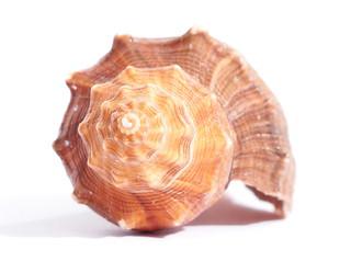 Spirale - Shell