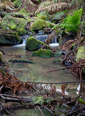 Tarra Valley (nigel0577) Tags: sony alpha ilca99m2 a99ii a99 carl ziess 2470 2470mm tarra valley victoria jungle rain forest nature beauty natural tarravalley australia au watefall water ferns polariser hoya focus stacked