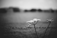 Start Where You Are.... (DefinitelyDreaming) Tags: lensbaby twist60 blackwhite roadside barbedwire fence