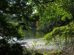 IMG_9494b (Naturecamhd) Tags: canonpowershotsx60hs sx60hs newyorkbotanicalgarden nybg twinlakes botanicalgarden green eco nature trees fall autumn bronx thebronx