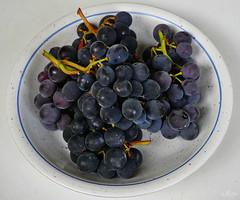 herbstliches Geschenk (Rolf Piepenbring) Tags: trauben grapes herbst autumn