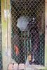 DSCF7233 (aaroncaley) Tags: vietnam animal cat