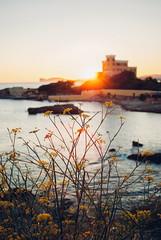 the brightest lights V (culuthilwen) Tags: sonyalpha230 minolta28mm minolta28mmf28 minoltaaf minolta f28 28mm bokeh alghero sardinia sunset goldenhour flowers seascape dof light blurry dusk blue yellow sonysti