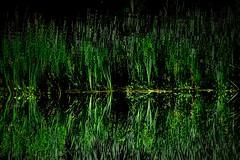 Multiplicity (toletoletole (www.levold.de/photosphere)) Tags: bayerparkleverkusen fujixt2 xf18135mm nature green grün natur wasser weeds water gräser spiegelung reflection