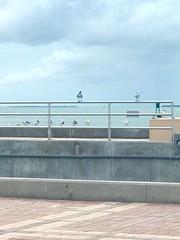 Perched (Suzenews) Tags: keywest birds seagulls
