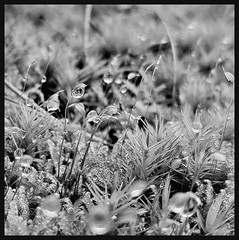 Raindrop (Dag R Thorsen) Tags: raindrop art beach blackandwhite bw city clouds color day europe flower flowers hiking home island july june landscape light macro march mountain mountains nature new night nikon ocean photo red sea sky snow spring summer sun sunset travel tree trees trip vacation water