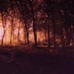 nikkiphotography-4713 thumbnail