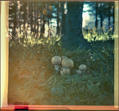 Another Instamatic 500 shot (Felip1) Tags: 17925 mushrooms expired film badscanningresultofpoorexposure
