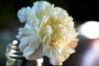 Blanco clavel