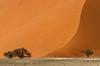 sand (Karl-Heinz Bitter) Tags: dune desert düne bäume trees sand namib namibia 40 light shadow wüste africa afrika karlheinzbitter orange