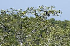 DSC_5386 (Almixnuts) Tags: kualaselangor nature naturepark kualaselangornaturepark