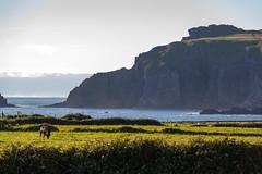 Ireland - Dingle Peninsula (Marcial Bernabeu) Tags: marcial bernabeu bernabéu irlanda ireland irish irlandes dingle peninsula cliffs acantilados marc