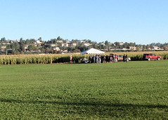 007 An Ominous Field Of Corn (saschmitz_earthlink_net) Tags: 2017 california temecula bighorsefeedandmercantile cornmaze orienteering laoc losangelesorienteeringclub corn