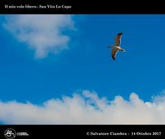 969_D8B_7848_bis_San_Vito_Lo_Capo (Vater_fotografo) Tags: vaterfotografo volo ciambra clubitnikon cielo controluce nikonclubit nikon nuvole natura nwn nuvola ngc nube ncg nubi gabbiani gabbiano uccello blu sicilia salvatoreciambra sanvitolocapo sanvito spiaggia seascape sole sabbia